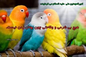 love-birds-wallpapers-beautiful